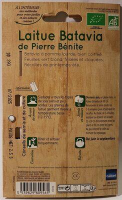 Laitue Batavia de Pierre Bénite - 2