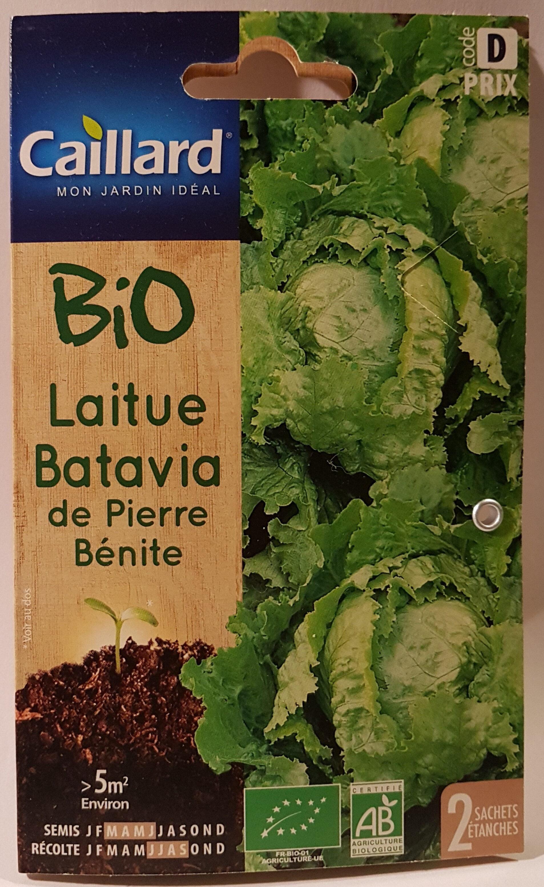 Laitue Batavia de Pierre Bénite - Product - fr